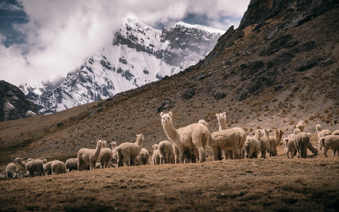 Trekking Off The Beaten Path To Machu Picchu – February 2018 Presentations