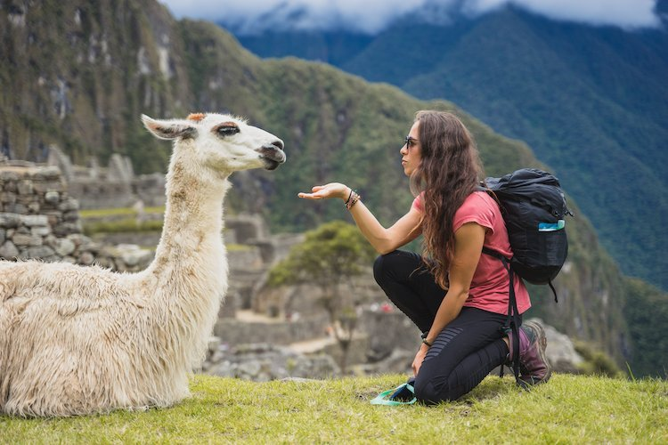 Llama on Salkantay by Thather Brusilow for Killa Expeditions small